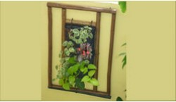 Wood frame with variety of plants